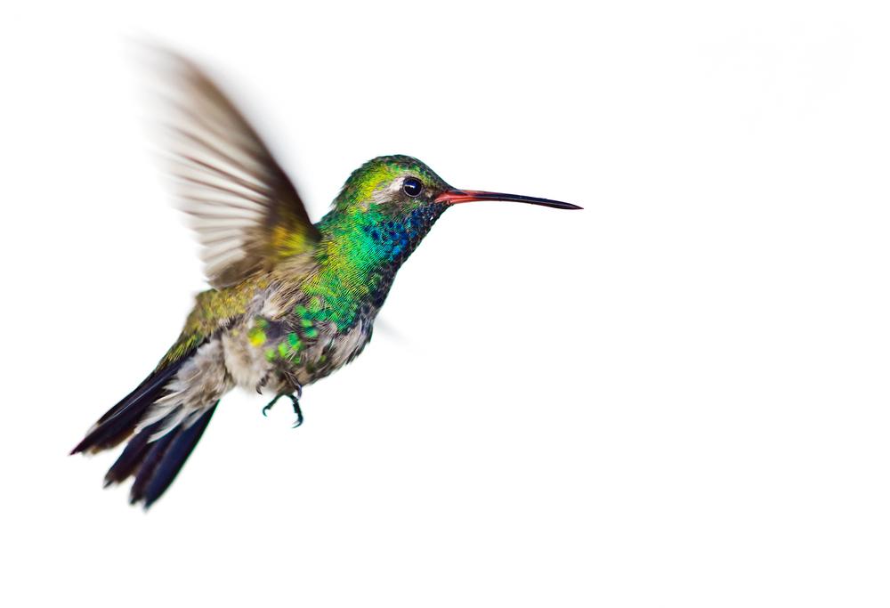 fly higher: cannabis PR